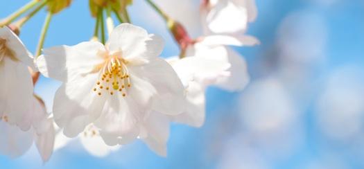 桜の花が咲く頃に、またお会いしましょう!!